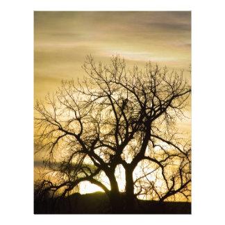 Hora de la magia del árbol de la luz de la puesta  membrete a diseño