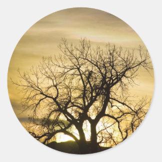 Hora de la magia del árbol de la luz de la puesta pegatina redonda