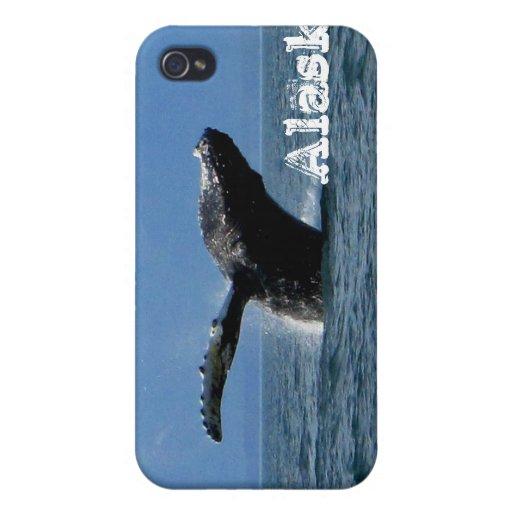 Hora del recreo de la ballena; Alaska iPhone 4 Fundas