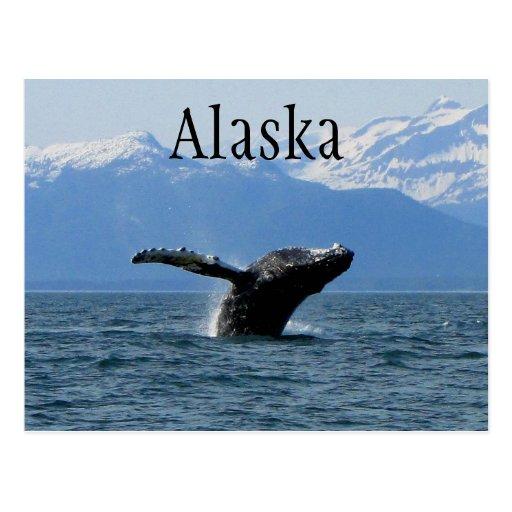 Hora del recreo de la ballena; Alaska Postales