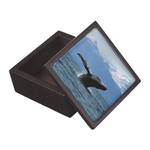 Hora del recreo de la ballena; Ningún texto Caja De Regalo De Calidad