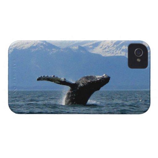 Hora del recreo de la ballena; Ningún texto iPhone 4 Cobertura