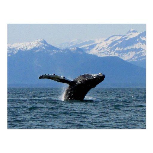 Hora del recreo de la ballena; Ningún texto Tarjeta Postal