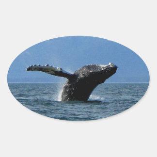 Hora del recreo de la ballena calcomanía óval