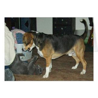 Hora del recreo - perro del beagle y gato azul tarjeta pequeña