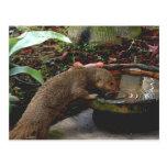 Hora feliz de la fauna de la mangosta postales