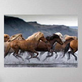 Horda caballos, Papel fijar (mate) Póster