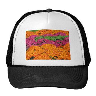 Horizontal template hats