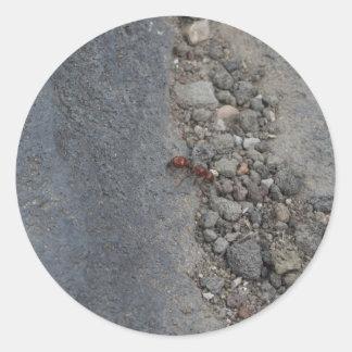 Hormiga de reina de Brown en las rocas Pegatina Redonda