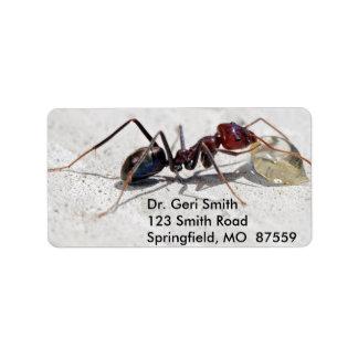 Hormiga del comedor de la carne que alimenta en la etiqueta de dirección