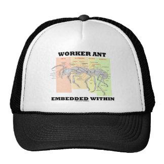 Hormiga del trabajador encajada dentro de morfolog gorros