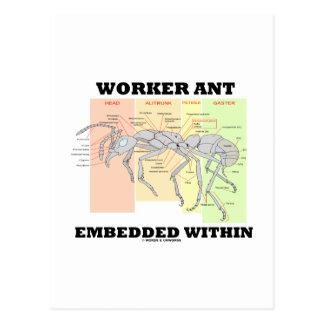 Hormiga del trabajador encajada dentro de morfolog tarjetas postales