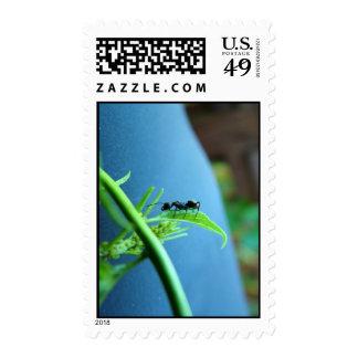 Hormiga en sellos de la hoja