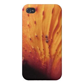 Hormiga en usted iPhone 4/4S carcasas