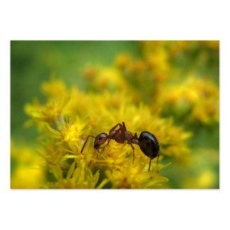 Hormiga minúscula en el ATC de la vara de oro Tarjetas De Visita Grandes