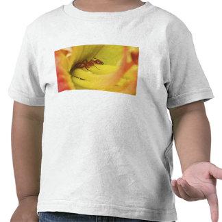 Hormiga roja, Formica Spp. Camisetas