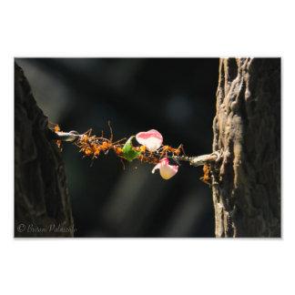 Hormigas del cortador de la hoja fotografías