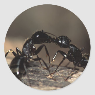 hormigas pegatina redonda