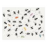Hormigas por todas partes tarjeta postal