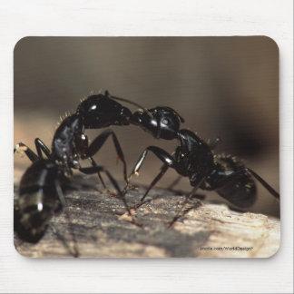 Hormigas Tapetes De Ratón
