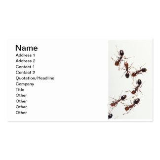 hormigas tarjetas de visita