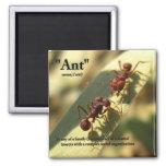 Hormigas y actitud - imán #3