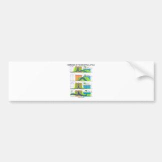 Hormones Of The Menstrual Cycle (Menstruation) Bumper Sticker