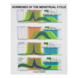 Hormones Of The Menstrual Cycle Menstruation Poster