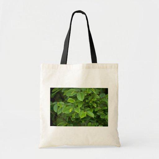 Hornbeam (Carpinus Betulus) Bolsa De Mano
