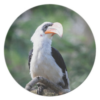 hornbill-3587= party plate