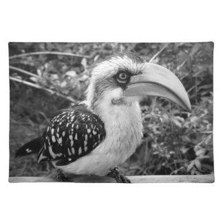 Hornbill bird close up looking at camera bw placemat