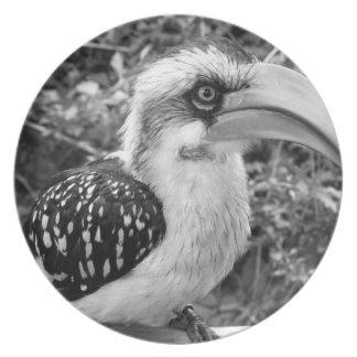 Hornbill bird close up looking at camera bw dinner plate