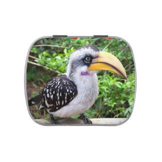 Hornbill bird jelly belly tin
