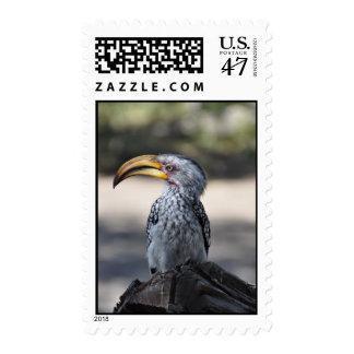 Hornbill Bird Postage Stamp