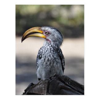 Hornbill Bird Postcard