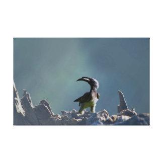 Hornbill bird Warrior spirit Canvas Print