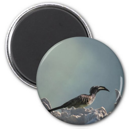 Hornbill bird warrior spirit magnet