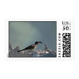 Hornbill bird Warrior spirit Postage