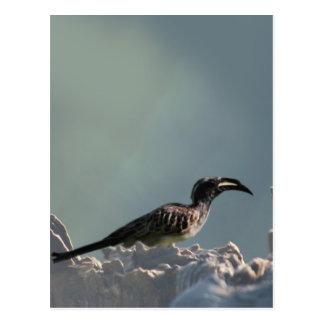 Hornbill bird warrior spirit postcard