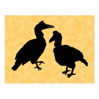 Hornbill Birds. Postcard
