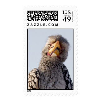 Hornbill cargado en cuenta amarillo sello