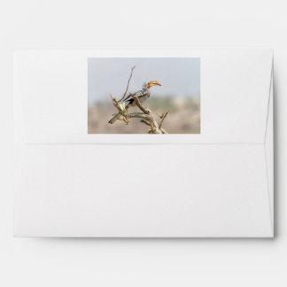 Hornbill cargado en cuenta amarillo sobres