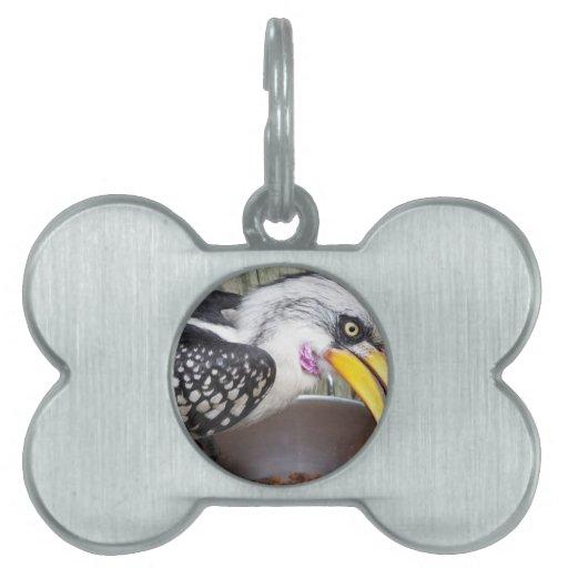 hornbill en cierre del plato de la comida para arr placas de nombre de mascota