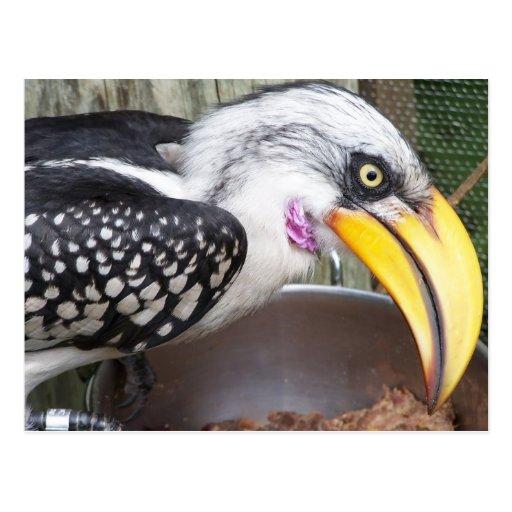 hornbill en cierre del plato de la comida para arr postales