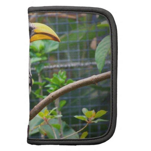 hornbill en perca en plantas verdes planificador