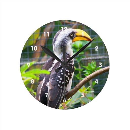 hornbill en perca en plantas verdes reloj
