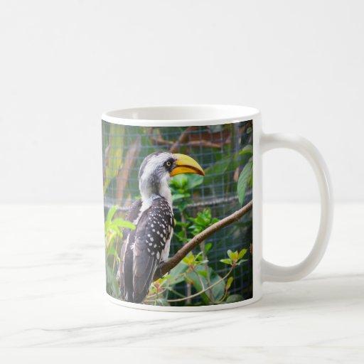 hornbill en perca en plantas verdes taza de café