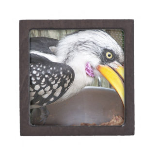 hornbill in food dish close up gift box