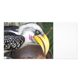 hornbill in food dish close up photo card
