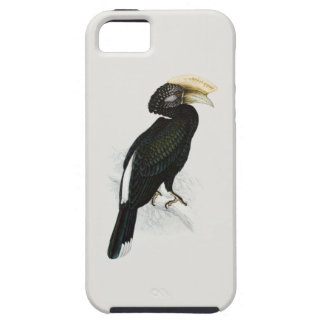 Hornbill (Silvery cheeked) iPhone SE/5/5s Case